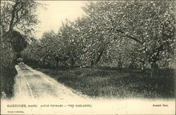 Apple Orchard - The Oaklands