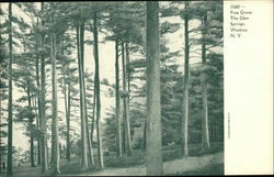 Pine Grove at The Glen Springs