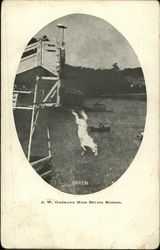 J.W. Gorman's High Diving Horses Queen
