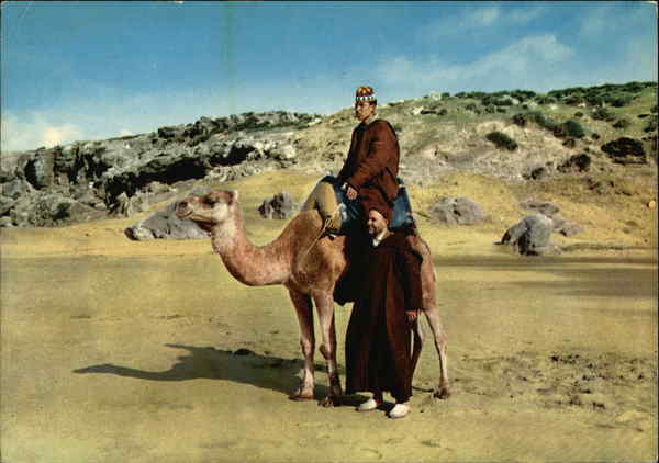 Camel and Riders Tangier Morocco Africa