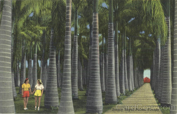 Stately Royal Palms Scenic Florida