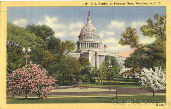 U. S. Capitol At Blossom Time Wash District of Columbia