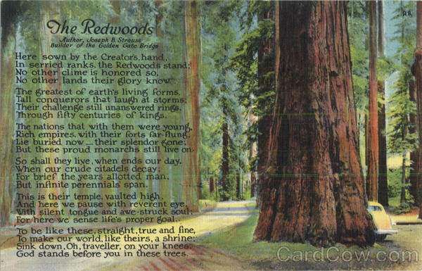 The Redwoods Poems