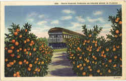 Train Passing Through An Orange Grove In Florida