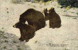 Mother Bruin And Her Triplets Just Waiting
