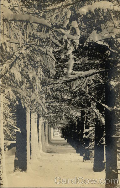 View Down Tree Lined Sidewalk Landscapes