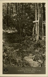 The Berkshire Summer School of Art - The Woods Trail Postcard