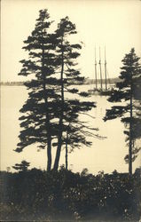 Trees on West Boothbay Harbor