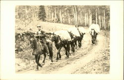 Man Leading a Pack Train Postcard
