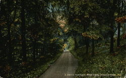 A Drive Through Ross Park Postcard