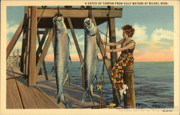 A Catch of Tarpon from Gulf Waters Biloxi Mississippi