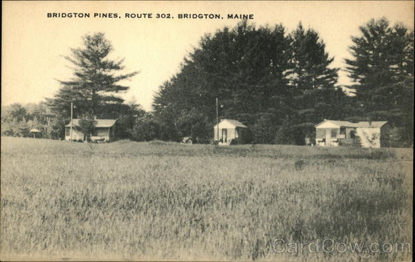 Bridgton Pines Maine