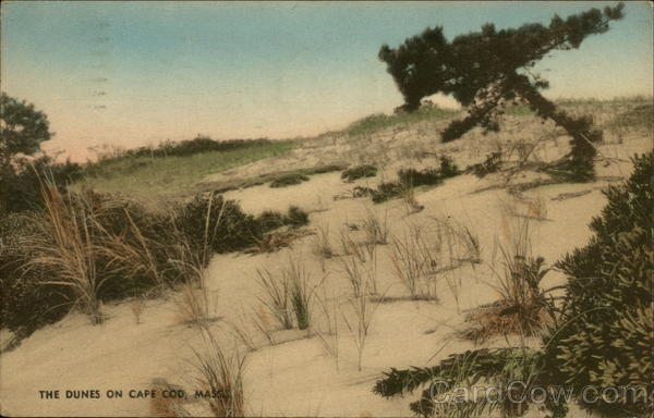 The Dunes on Cape Cod Massachusetts