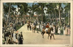 Miami Jockey Club - The Paddock