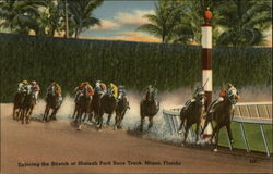 Entering the Stretch at Hialeah Park Race Track
