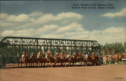 Hialeah Race Course - Horses at the Starting Gate