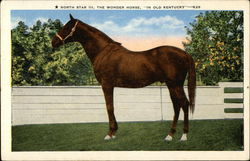 "North Star III, The Wonder Horse, ""In Old Kentucky"""