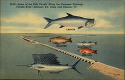 Some of the Fish Cauight Along the Overseas Highway Florida Keys - Channel #2, Craig and Channel #5