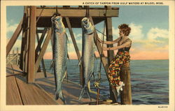 A Catch of Tarpon from Gulf Waters