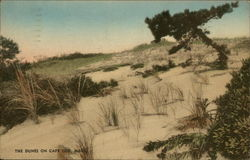 The Dunes on Cape Cod