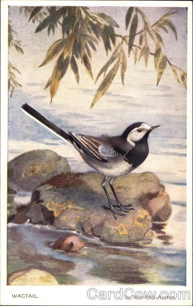 Wagtail by Winifred Austen Birds