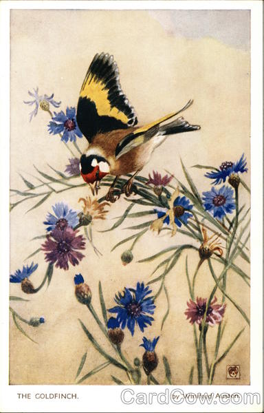 The Goldfinch by Winifred Austen Birds