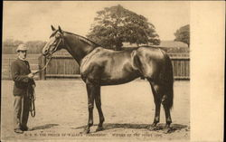 "H. R. H. the Prince of Wales's ""Persimmon"". Winner of the Derby 1896 Postcard"