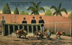 Breaking From Starting Box at Miami Beach Dog Track