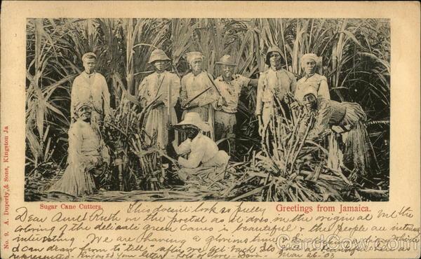 Sugar Cane Cutters Jamaica