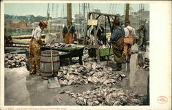 Fishermen Weighing Up the Catch