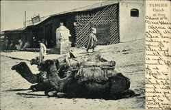 Tangier. Camels at Soco