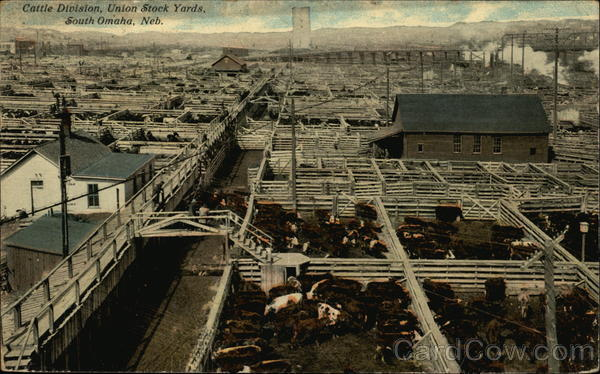 Cattle Division, Union Stock Yards South Omaha Nebraska
