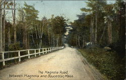 The Magnolia Road, Between Magnolia and Gloucester, Mass Postcard