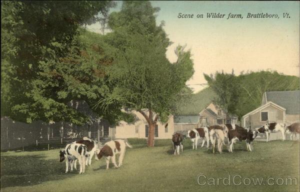 Scene on Wilder Farm Brattleboro, VT