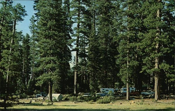 Typical Camping Area Under the Towering Ponderosa Pines at Lake Almanor, Calif California