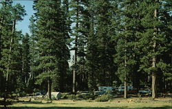 Typical Camping Area Under the Towering Ponderosa Pines at Lake Almanor, Calif