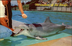 Marineland of the Pacific, Flipper, the Talking Dolphin