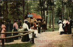 Feeding Camels in the Zoological Garden, Lexington Park