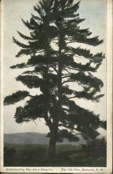 The Old Pine