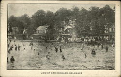 View of Oak Orchard, Delaware