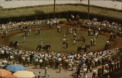 Racing at Del Mar