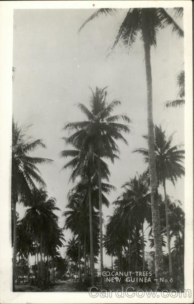 Cocanut Trees New Guinea South Pacific