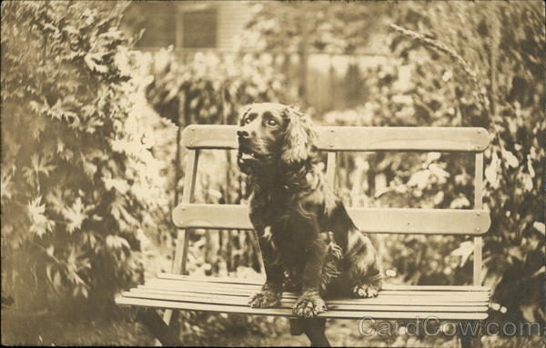 Spaniel Sitting on Bench Dogs
