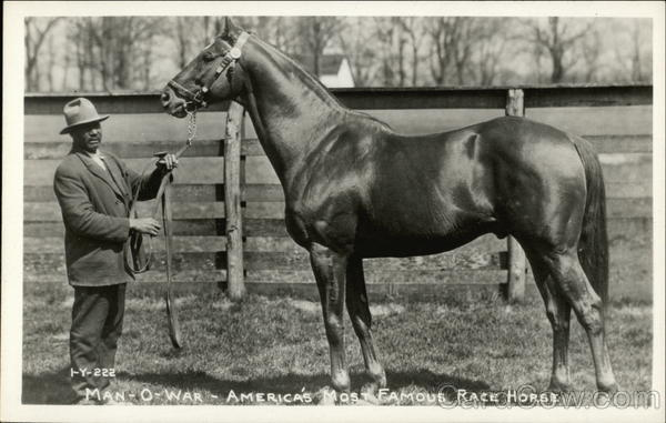 Man-O-War - America's Most Famous Race Horse Horses