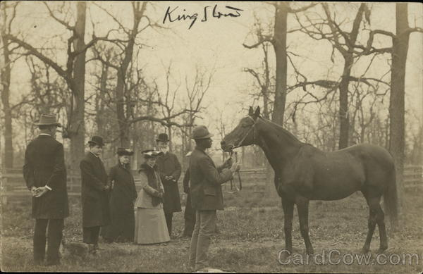 Showing Horse, King Stow Horses Black Americana
