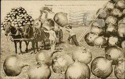 Loading Giant Onions on Wagon