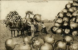 Loading Huge Onions Onto Horse Drawn Wagon