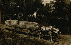 Horses Pulling Huge Harvested Corn Cob