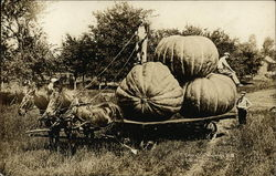Huge Pumpkins on Wagon