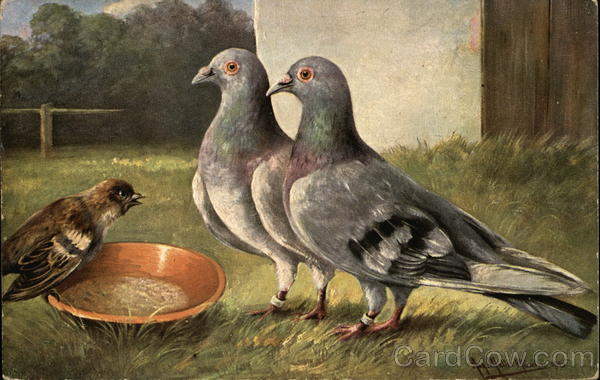 Two Pigeons and Small Bird by Orange Bowl Birds
